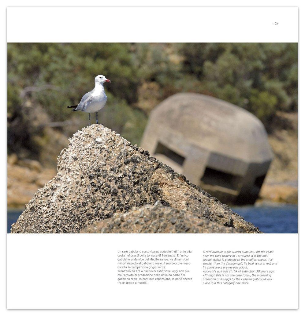 """Gabbiano corso, pagina del libro """"Il mare di Siracusa"""" di Luca Tamagnini, edizione Photoatlante."""