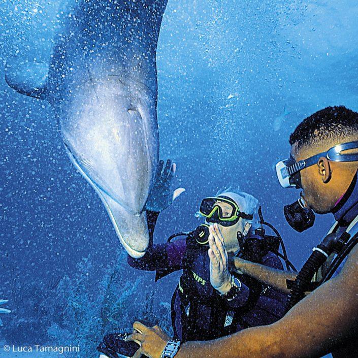 Folco Quilici, immersione in mare aperto con un delfino addestrato, Bahamas 1992