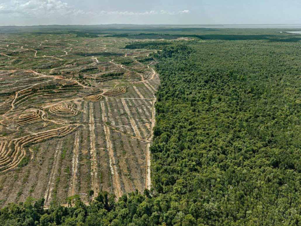 Edward Burtynsky - Clearcut #1- Palm Oil Plantation, Borneo, Malaysia, 2016