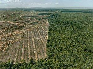 Edward Burtynsky - Clearcut #1- Palm Oil Plantation, Borneo, Malaysia, 2016.