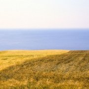 Campi di grano sul mare - Portonovo, Ancona - Monte Conero 1990 Foto Fine Art 110x50 cm di Luca Tamagnini