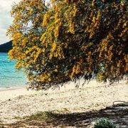 Sardegna, Porto Conte Spiaggia di Mugoni sullo sfondo il mare e lontano Capo Caccia / Luca Tamagnini Catalogo 2008-036
