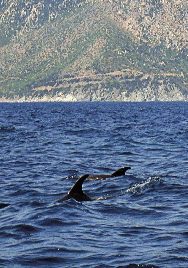 Villasimius-Spiaggia-Santo-Stefano-delfini-tursiope-1-foto-di-Luca-Tamagnini