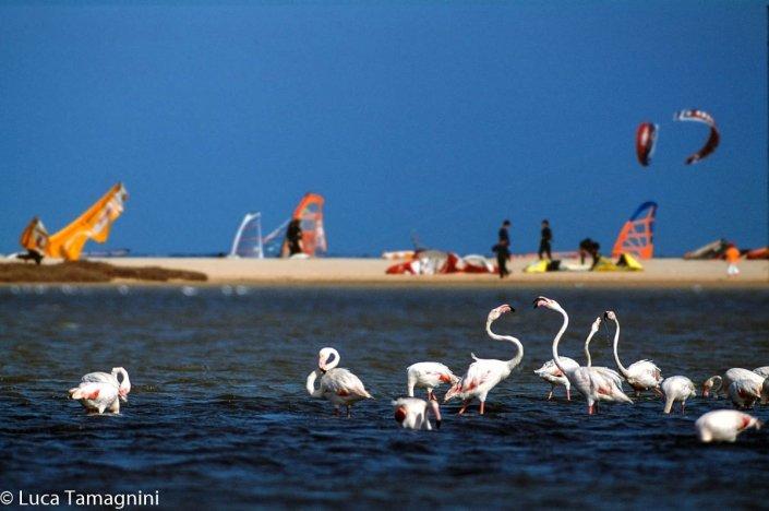 Villasimius-Stagno-di-Notteri-fenicotteri-e-kite-surf-foto-di-Luca-Tamagnini