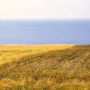 Foto Mare Adriatico. Monte Conero, Portonovo, campi di grano sul mare. (Immagini Mare / Album Italia)