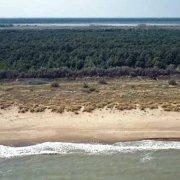 La spiaggia, le Dune e la Pineta del Lido di Classe dal cielo