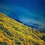 Casteldimezzo, la costa ricoperta di fiori gialli delle ginestre in riva al mare