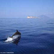 Foto Mare Sicilia. Isole Eolie, delfino con Stromboli sullo sfondo