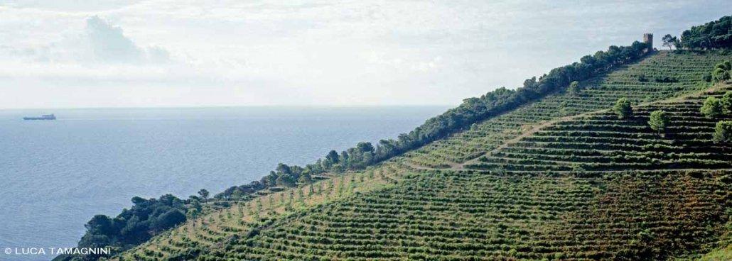 Gorgona vigne sul mare della colonia penale