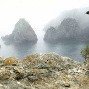 Isole Tremiti Isola di San Domino Scogli I Pagliai e gabbiani reali