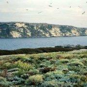 Isole Tremiti Isola di San Nicola da Capraia (Caprara)