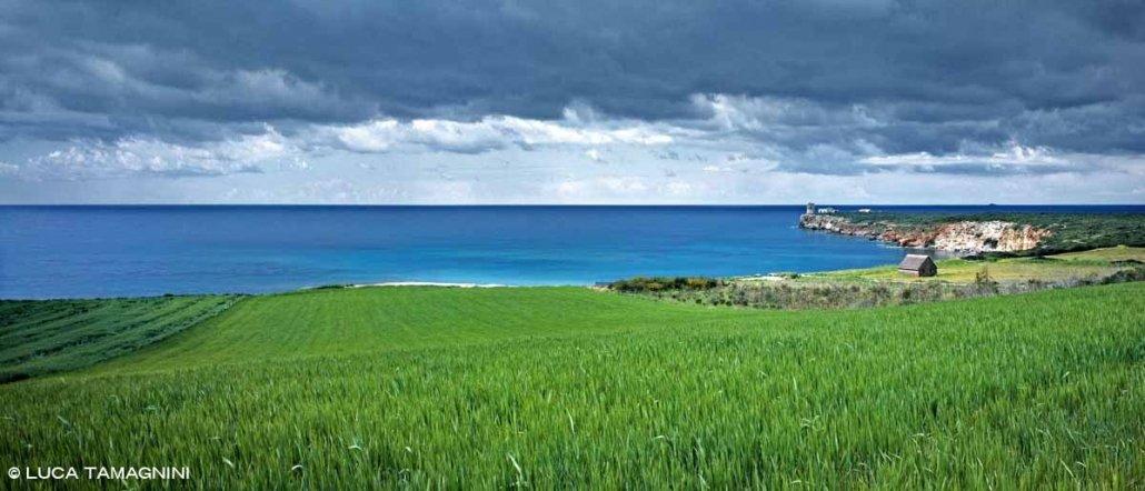 Penisola del Sinis Barracas e campi di grano sul mare a Torre Seu mare scuro e cielo nuvoloso