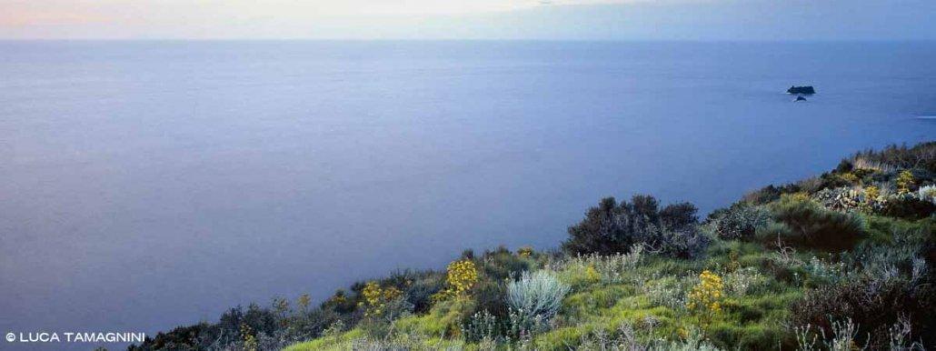 La costa di Ventotene fiorita e gli Scogli Le Sconciglie in mezzo al mare lontani