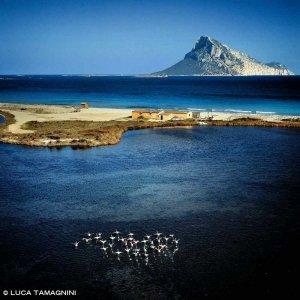 Porto Taverna dal cielo con fenicotteri sullo sfondo il mare e l'Isola di Tavolara (foto aerea)
