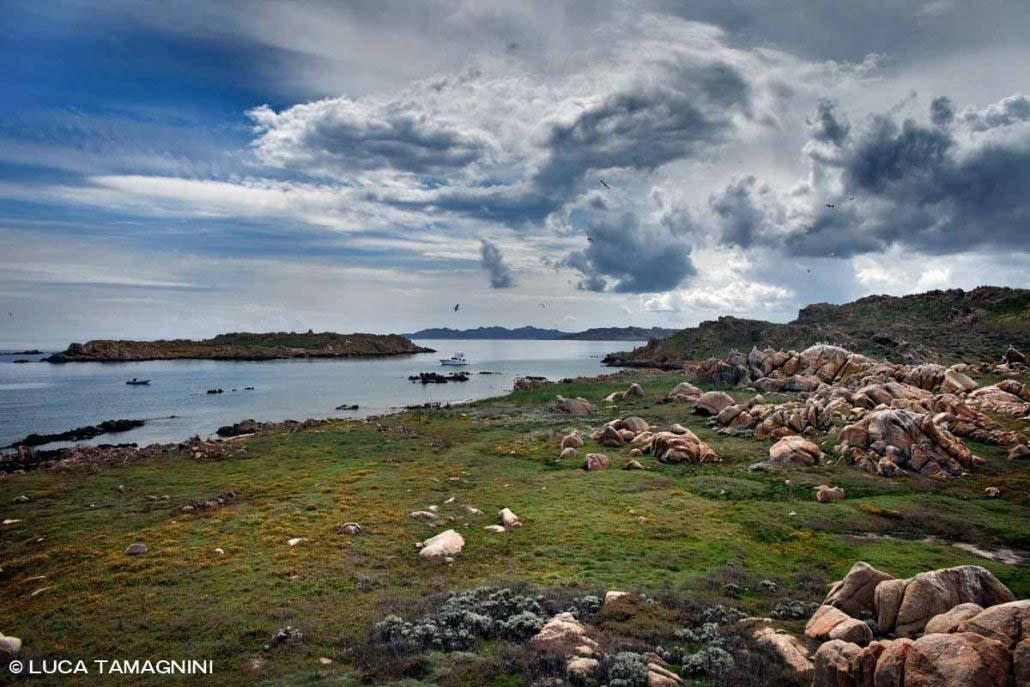 Arcipelago di La Maddalena, Isola di Corcelli a primavera con prati verdi / Luca Tamagnini Catalogo 2009-012