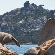 Sardegna, Arcipelago di La Maddalena, Isola di Santo Stefano Graniti con forme di animali sullo sfondo il tafone di Capo d'Orso / Luca Tamagnini Catalogo 2009-014