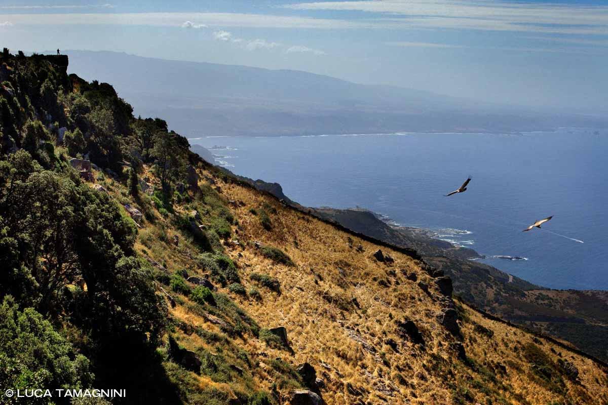 Sardegna, Capo Marargiu Grifoni in volo sullo sfondo il mare / Luca Tamagnini Catalogo 2009-024