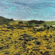 Sardegna, Capo Malfatano camper tra ginestre fiorite in riva al mare / Luca Tamagnini Catalogo 2010-032