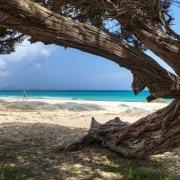 Sardegna, Costa Rei Cala Cinzias sullo sfondo il mare, la spiaggia e un tronco di albero tamerice in primo piano