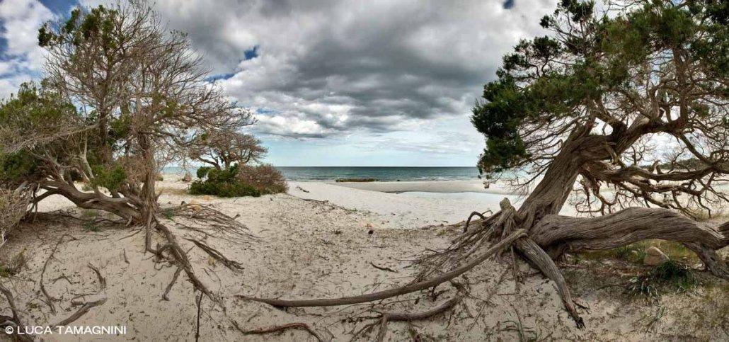 Sardegna, Spiaggia di Bidderosa ginepri secolari adue passi dal mare