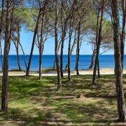 Sardegna, Santa Lucia, pineta sul mare con due turisti in passeggiata, sullo sfondo il mare