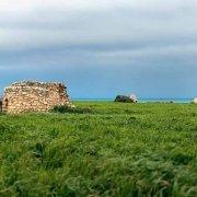 Costa dei Trulli, trulli nel grano sullo sfondo il mare