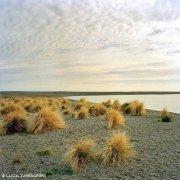 Sicilia Oliveri Laghetti di Marinello spiaggia con cespugli gialli vicino al mare