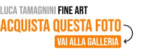 banner luca tamagnini fine art