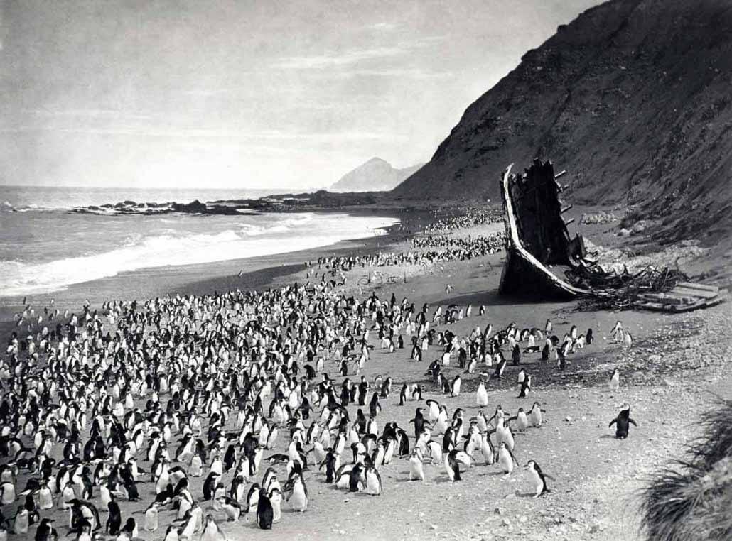 Paesaggio marino di Frank Hurley - Pinguini sulla spiaggia di The Nuggets e il relitto di The Gratitude, 1911