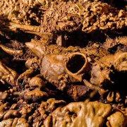 Foto Alghero / Area Marina Protetta di Capo Caccia - Isola Piana / Foto Subacquee di Luca Tamagnini Fuori Catalogo / Grotta dei Cervi deposito preistorico di ossa di prede calcificate