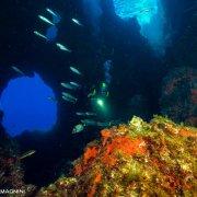 Foto Alghero / Area Marina Protetta di Capo Caccia - Isola Piana / Foto Subacquee di Luca Tamagnini Fuori Catalogo / Grotte subacquee Isola Foradada