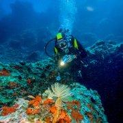 Foto Alghero / Area Marina Protetta di Capo Caccia - Isola Piana / Foto Subacquee di Luca Tamagnini Fuori Catalogo / Fondali Isola Foradada spirografo
